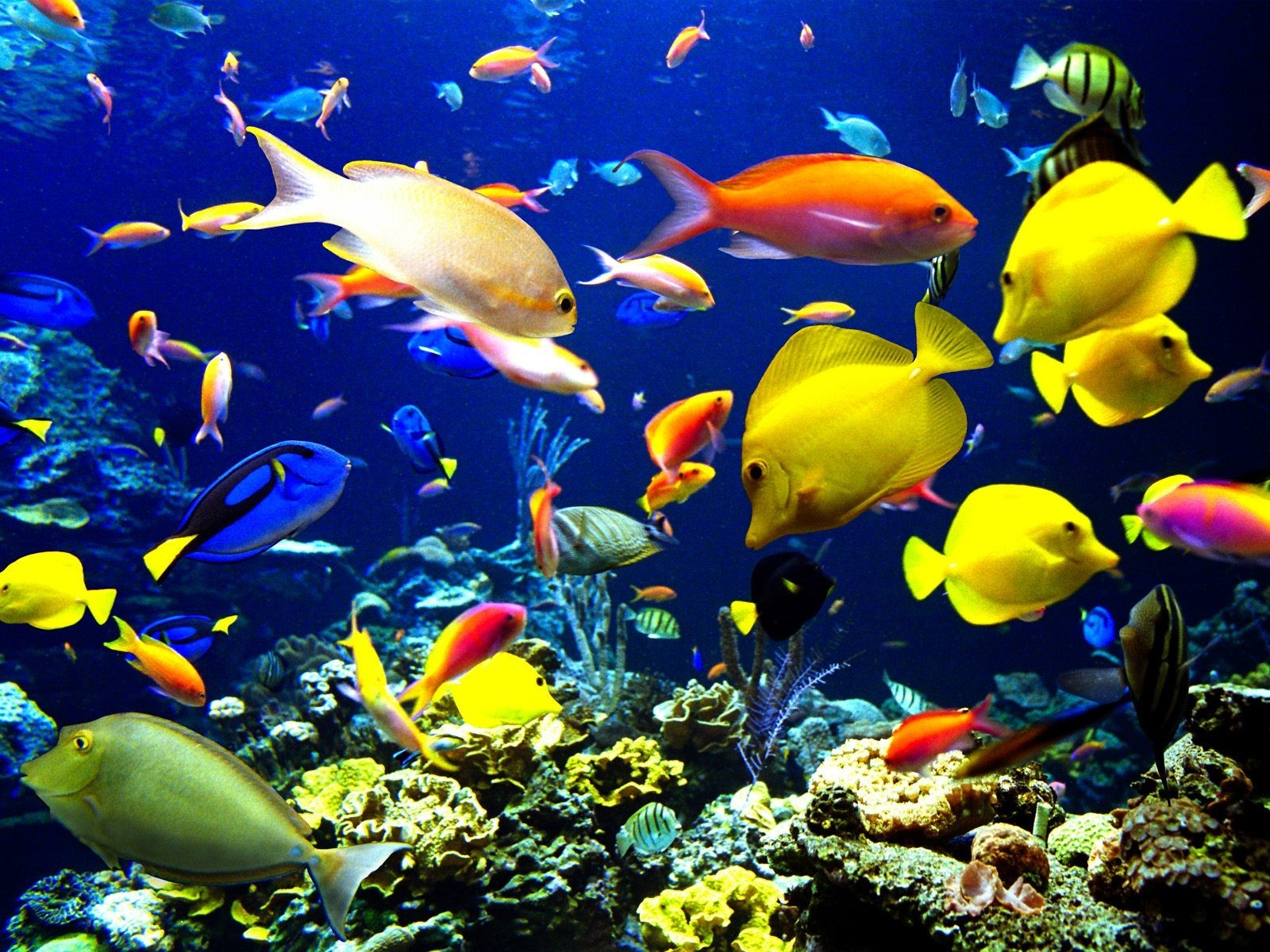 """Underwater Tropical Fish """"The Crumbs On The P..."""